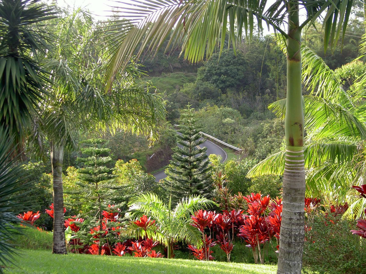 Photos | Maui Garden o...