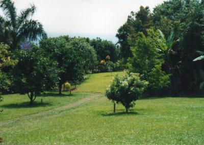garden-before018